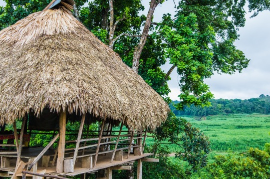 Panamanian jungle. Copyright 2015, used with permission by Laura Pitcher